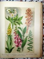 `Ботанический Атлас` К.Гофман и Н.А.Монтеверде, главный ботаник Императорского С.-Петербургского ботанического сада. 1916 г