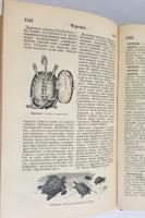 `Иллюстрированный словарь общеполезных сведений` Под редакцией Эльпе. СПб, 1898 г. Издание А.С.Суворина