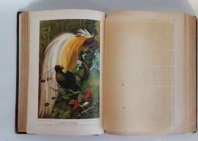 `Жизнь животных` А.Э. Брэм. С.-Петербург, типография тов-ва «Просвещение», 1900 г.