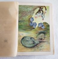 `В глубине вод` А.Шлейер. Москва, Издание В.М.Саблина, 1912 г.