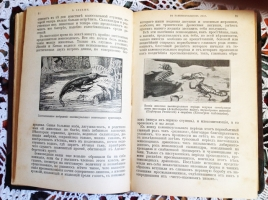 `В каменноугольном лесу. Дни творения. Первобытные люди` Вильгельм Бёльше. Москва, 1912 г