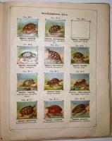`Рельефный зоологический атлас. Часть третья. Пресмыкающиеся и рыбы.` Гагельберг. СПб, 1880г