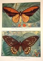 `Жизнь животных в фотографиях с натуры` Составил Чарльз Д.Корниш. Москва 1910 г.