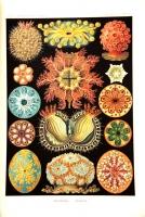 `Красота форм в природе` Профессор Эрнст Геккель. СПб. 1903 г.