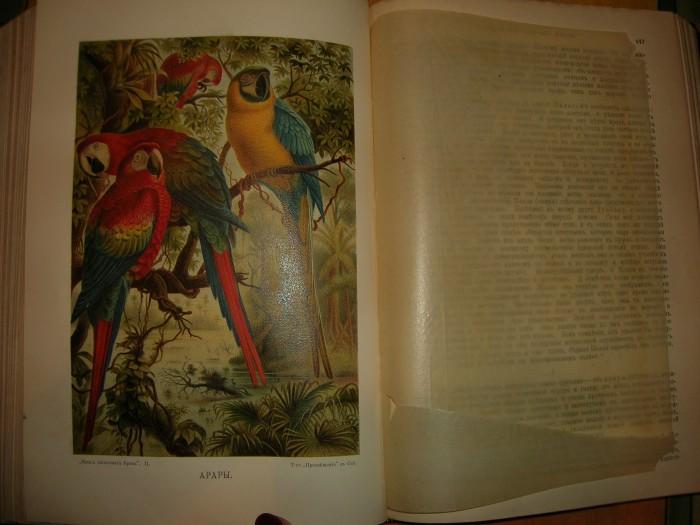 `Жизнь животных` Брем. 1902 год, С-Петербург