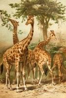 `Жизнь животных` А.Э. Брэм. Спб., типография тов-ва «Просвещение», 1909 г.