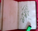 `Описание естественной и искусственной флоры для лужаек и корма (Traite des prairies naturelles et artificielles)` Жозеф - Эдуард Буатард (Par M.Boitard). Париж, 1827 г.
