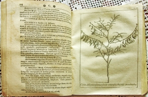 `Herbariae doctrinae Duum Viris excellentissimis et undiqvaqve celeberrimis` Petro Hotton,  Casparo Comelino. 1700 г.