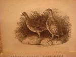 `Frank Forester` Henry William Herbert. 1852, New York