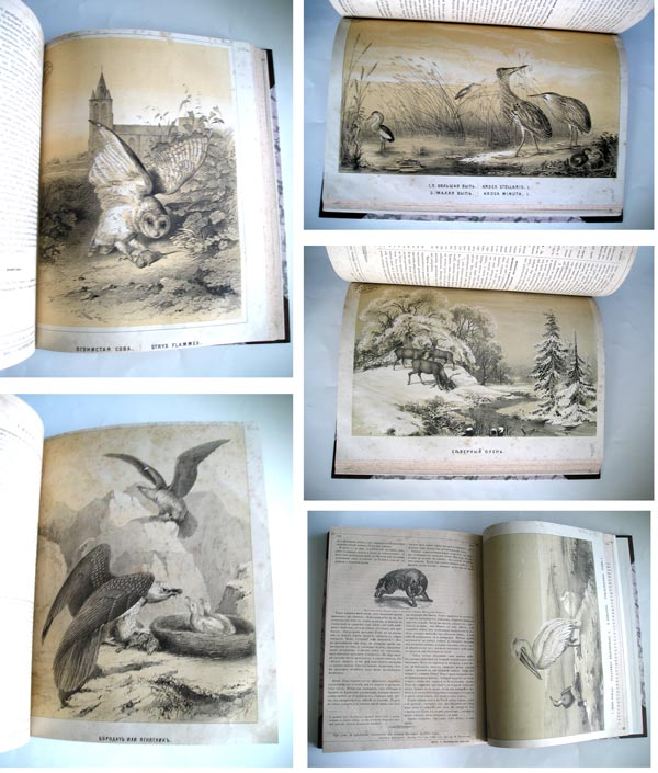 `Вестник естественных наук` . Москва. 1854 г.