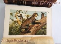 `Происхождение животного мира` Вильгельм Гааке. Санкт-Петербург, Книгоиздательское Товарищество Просвещение, 1903 год