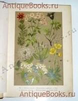 Ботанический Атлас по системе Де-Кандоля. Гофман, К.. С.-Петербург, издание А.Ф. Девриена, 1897 г.