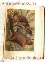 `Жизнь животных` А.Э. Брэм. Спб., типография тов-ва «Просвещение», 1903 г.